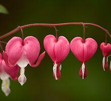 Hearts Progression by heylisa