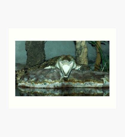 Freshwater Crocodile Art Print