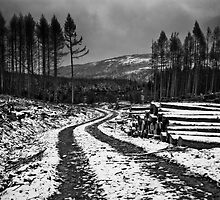 The loggin path by carlw