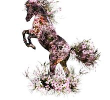 Black horse (horse and flowers) by 42beats