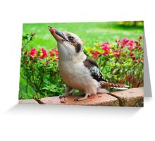 Kookaburra who visits my garden. Greeting Card
