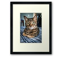 Lola the Cat Framed Print