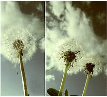 Dandelion  by Angie Fouquette