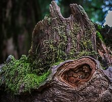 Patriarch Tree Detail by Nicole Petegorsky
