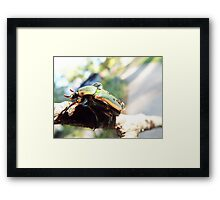 Beetle with Dew Framed Print