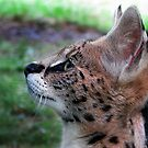 Young Serval by Nikki Collier