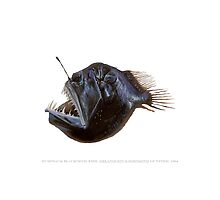 Humpback Blackdevil Fish, (Melanocetus johnsonii) by StickFigureFish