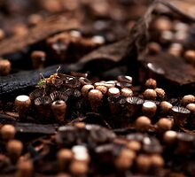 An Ant Amongst the Mushrooms by kael
