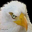 EAGLE  by Madeline M  Allen