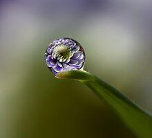 Flower Refraction by alliec