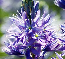 Purple Star by Kathleen Struckle