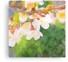 White Cherry Blossoms Digital Watercolor Painting 2 Canvas Print