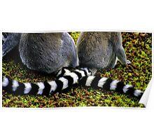 Lemur Tails Poster