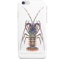Ornate Spiny Lobster (Panulirus ornatus)  iPhone Case/Skin
