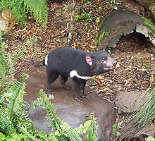 A Devil from Tasmania by Kirsten H