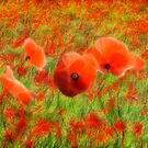 In Flanders Fields by John Edwards