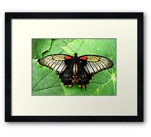 Let us fly towards happiness Framed Print