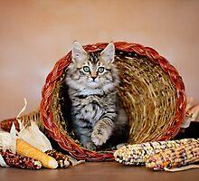 Kitty Cornucopia by AndreaBorden