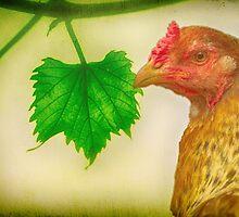 Orange Chook - Green Leaf by Clare Colins