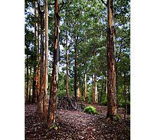 Aboriginal Lean To Photographic Print