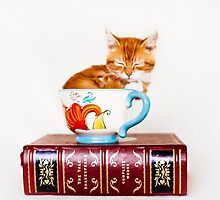 Teacup Kitten by AndreaBorden