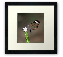 Elegance from nature Framed Print
