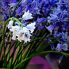 Bluebells With Wild Garlic by Michael May