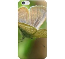 Poised - Long-tailed Pea Blue Butterfly iPhone Case/Skin