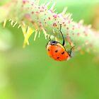 ladybird bum by Jen Wahl