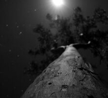 Moonlit Gumtree by Ben Messina