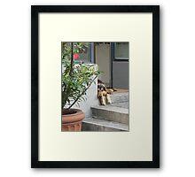 Lonesome Dog in Zurich Switzerland Framed Print