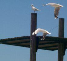 Seagulls in Flight by Alison Pearce