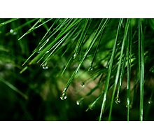 Raindrops 4 Photographic Print