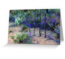 Pilliga Forest springtime wildflowers Greeting Card