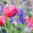 TJ's garden by marycloch