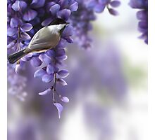 The Sweetness of Spring Photographic Print