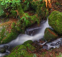 Mossy Rocks. by Bette Devine