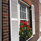 The Red Geranium at a Window, in London by Nira Dabush