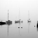 Fog On The Bay 2 by Kathryn Potempski