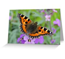 Small Tortoiseshell Butterfly Greeting Card