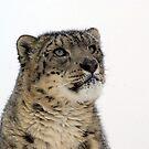 Snow Leopard 2 by mrshutterbug