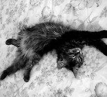 Gypsy Kitty by Cheekymonster