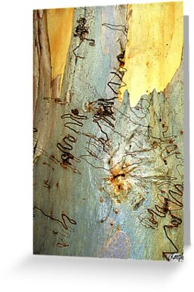 Graffiti bark on gum tree by ronsphotos