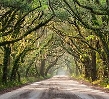 Charleston South Carolina Southern Dirt Road Regional Character by MarkVanDyke