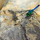 Dragonfly by Walter Strength