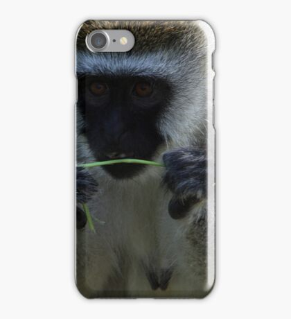 Vervet Monkey iPhone Case/Skin