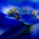 Blue Is Beautiful by Jenni77