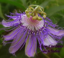 Passion Flower by Angi Baker