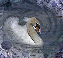 Canto de Cisne by Krys Bailey