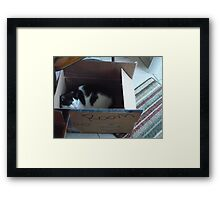 Sleeping in a Cardboard Box! Framed Print